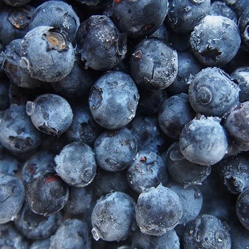 maviyemiş organik maviyemiş dondurulmuş maviyemiş